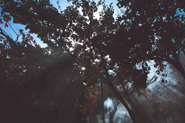 pexels-photo-734773